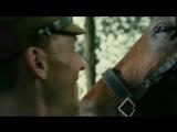 War horse vine