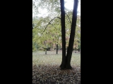 Листья желтые над городом кружатся...