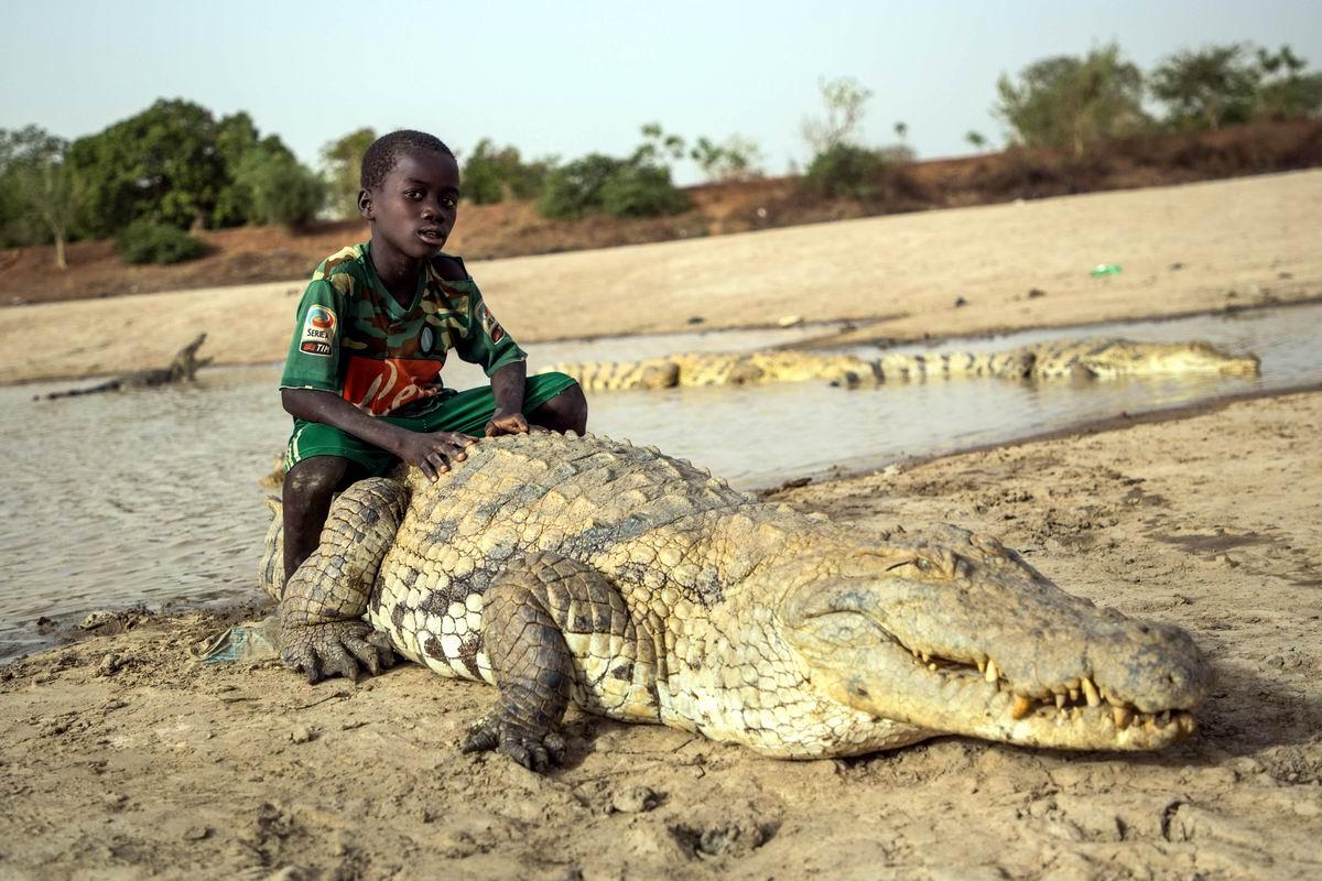Крокодил - мой лучший друг: С приветом из Буркина Фасо