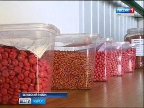 Вести-Курск. Как курские аграрии внедряют ресурсосберегающие технологии? - Вести 24