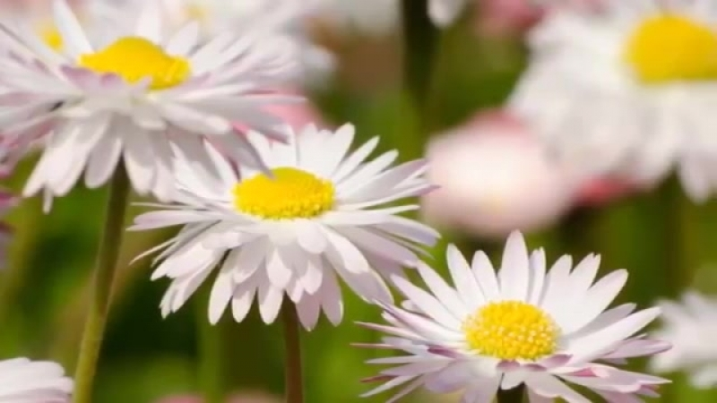 Красивое Позитивное видео Пожелание доброго, прекрасного дня Добрый День! ( 360 X 640 ).mp4