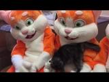 В Мурманске неизвестные рыжие коты оказали помощь Приюту