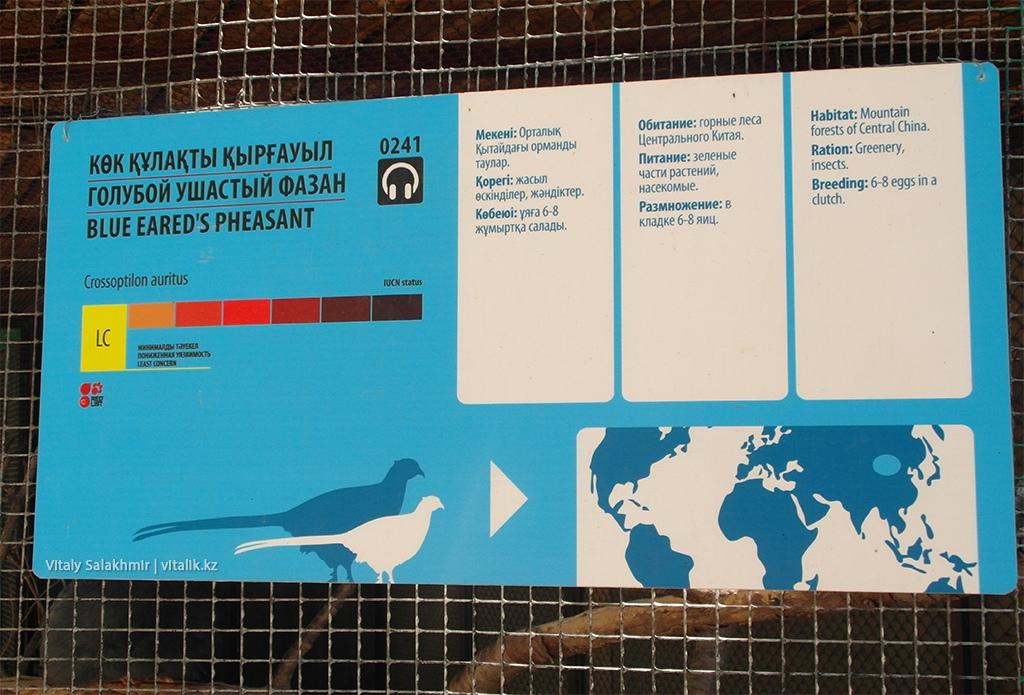 Табличка, голубой ушастый фазан, зоопарк Алматы, 2018