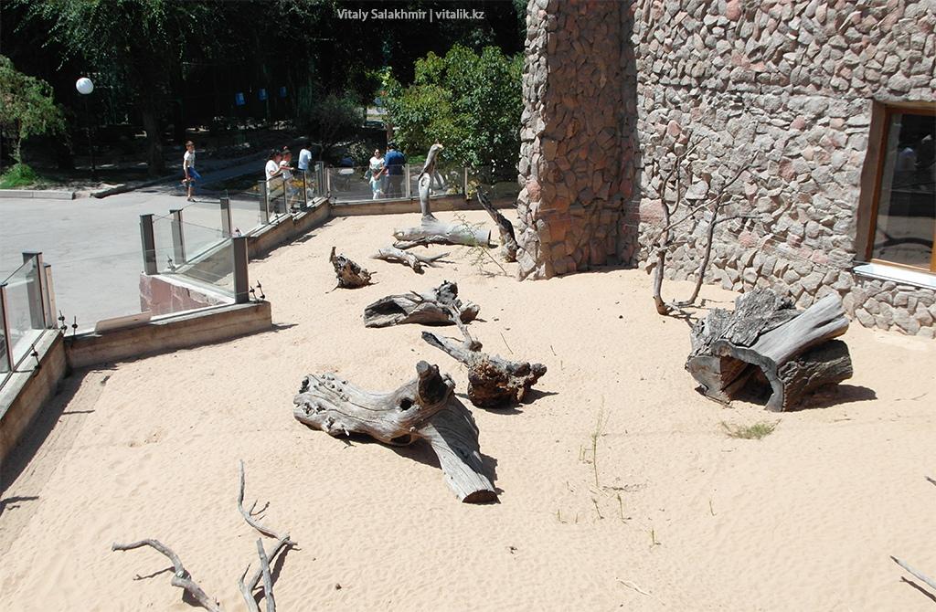 Загон с черепахами, зоопарк Алматы 2018
