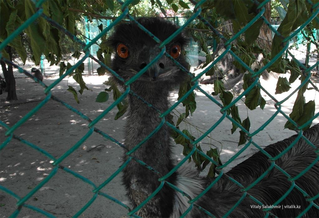 Страус в зоопарке Алматы, 2018