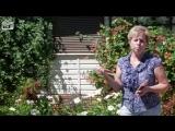Как безопасно бороться с вредителями в саду