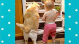Sweet Moments Between Babies and Cats #2 Top Cats Video Compilation