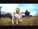 Отличный денек в парке для собак