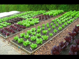 Самые лучшие органические удобрения