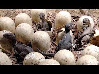 ЭТА находка ученых шокировала весь мир. Обнаружены яйца древних динозавров, кот ...