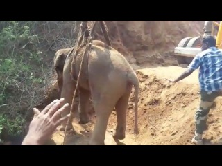 Baby Elephant Rescued From 70ft Well