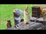 Скиталец (Серый мышонок Тарасик) - Мария Лукач