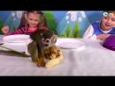 Видео в котором вас ждет Супер Челлендж Ееда против мармелада