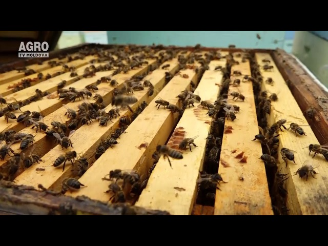 Pregătirea albinelor pentru iernare