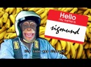 I like monkeys by Mister Metokur