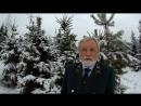 Вредителей леса на новогодней ели быть не может