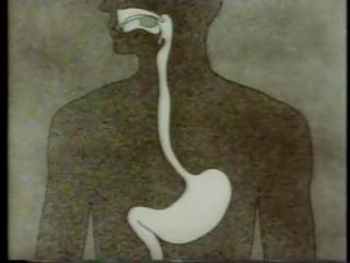 Анатомия и физиология человека 7. Пищеварение