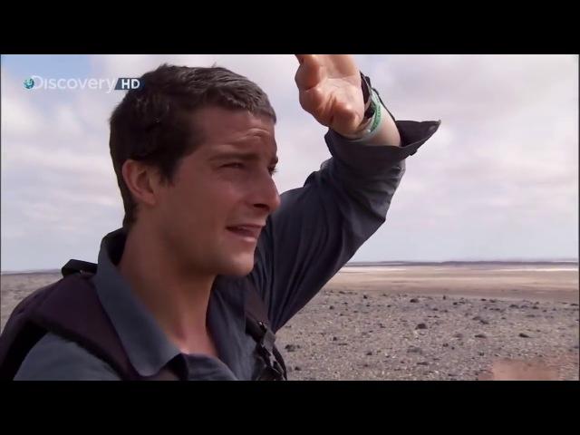 Выжить любой ценой.Пустыня Намиб