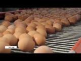 Открытие нового корпуса на котласской птицефабрике