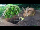 Amazing Quick Rabbit Trap By Digging Deep Hole - How To Catch Rabbit With Primitive Deep Hole Trap