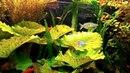 Мой аквариум. Пробная съёмка на мобильник.