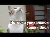 История уникальной кошки Эйбл