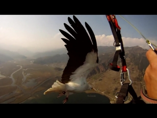 Parahawking in Nepal - Amazing!