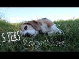 5 years together Beagle Xena