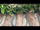 Smart man dig 4 deep hole fishing trap with water pipe catch a lot of fish
