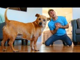 Что будет, если притвориться мертвым перед своей собакой?