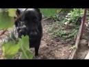 Это Марат.Он живет в Херсоне и как обычный,нормальный херсонский пес обожает виноград.