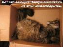Самые смешные фото кошек и котят под песню поющих бурундучат