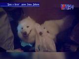 ТВМ продолжает принимать видеоролики на конкурс «Человек собаке друг».