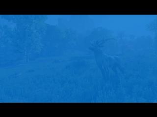 The Elder Scrolls Online | Journey to Summerset