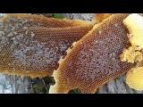Дикий мёд в Уральских горах (Wild Honey from The Urals)
