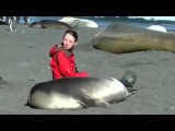 Seal befriends woman sitting on the beach