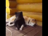 И медведь собаке друг - это знают все вокруг  ?