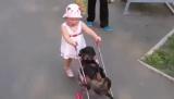 Приехала внучка... Кот сразу притворился мёртвым, собака не успела...