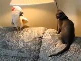 Попугай сказал коту, это мой диван.