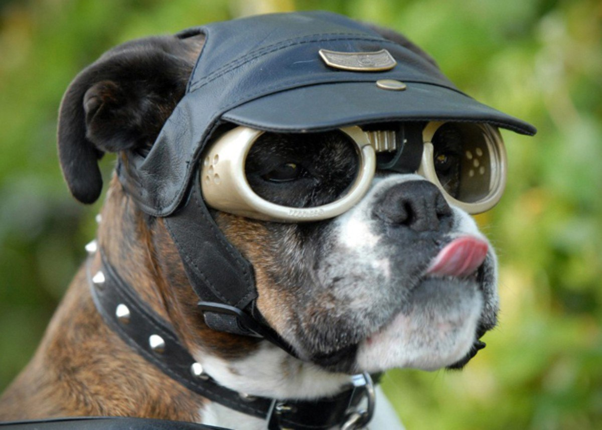 Кей картинки, смешная картинка собаки в очках