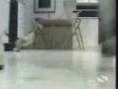 відео про котів!