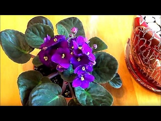 10 эффективных способов избавиться от мошек в цветочных горшках Комнатные растения