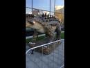Динозавры в тц