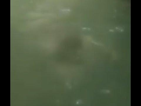 Друзья снимали как сплавлялись по реке но под водой их ждало нечто ужасное
