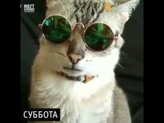 Ох уж эти котики