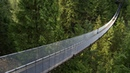 Картинка мост Лес хвойный лес сетка Nuotraukų tiltas Miško spygliuočių miško akių