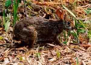 20 АПРЕЛЯ 1979 ГОДА НА ПРЕЗИДЕНТА США ДЖИММИ КАРТЕРА НАПАЛ КРОЛИК Бэрримор, кто это так воет на болотах Из анекдота Следуй за белым кроликом Matrix, The Довелось наткнуться в Википедии на