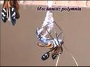 Золотые куколки Mechanitis polymnia