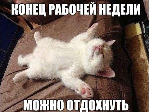 НОВИНКА Нарезка приколов с животными №2. Июль 2019
