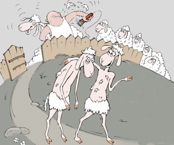Анекдот Про Черную Овцу